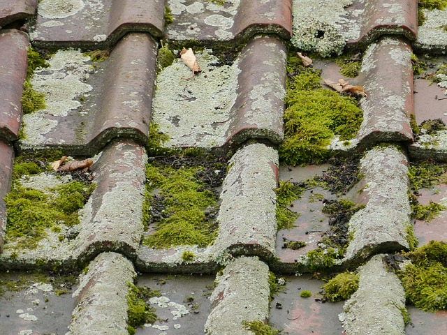 How To Maintain Moss Free Roof Tiles Jj Roofing Supplies