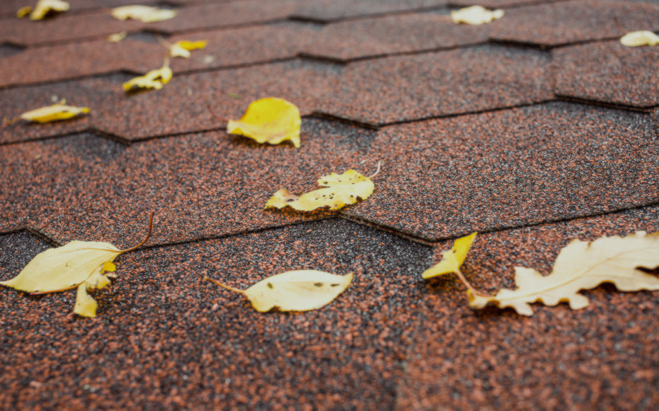 Top roof maintenance tips to keep your roof clean and prevent leaks