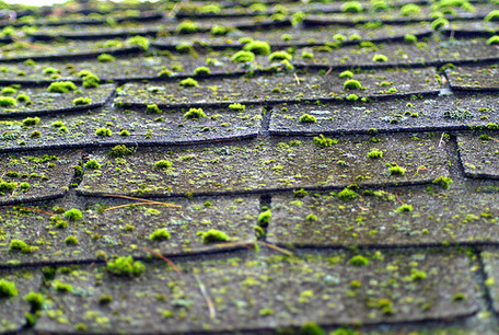 Roof affected by moss