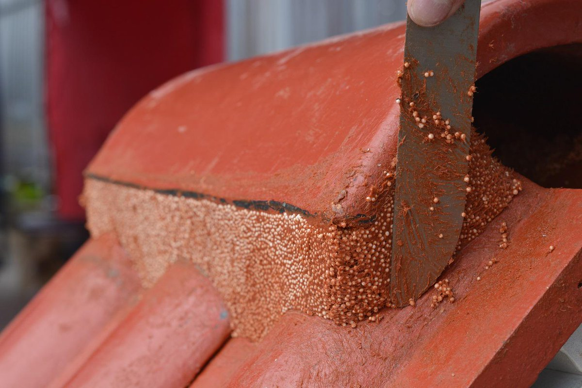 Everything You Need to Know about Flexim Roof Putty