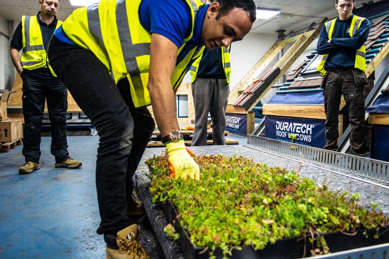 Installing and Maintaining a Green Roof: How Much Does It Cost?